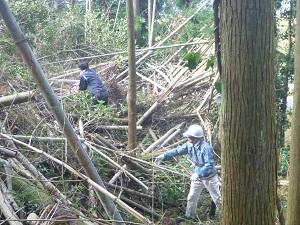 第10回竹の伐採集積.jpg