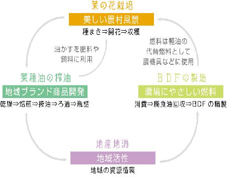 菜の花 図.png