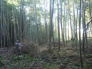 里山12-03.jpg