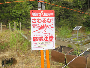 薬草61.png