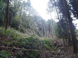 里山9-5.jpg